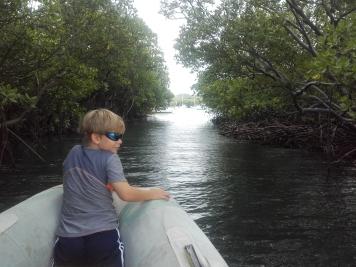 Passage dans la mangrove