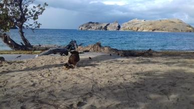 Poules en liberté sur la plage de Pont-Pierre