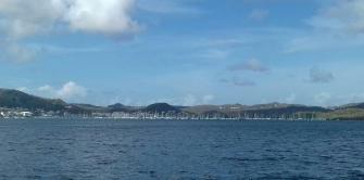 Forêt de mats au Marin